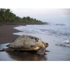 Costa Rica Turtles and Tortuguero National Park for Two